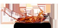 dead bug pest control